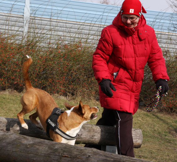 Mobile Hundetrainerin - Galerie