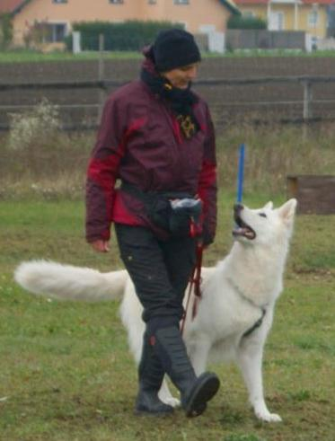 Mobile Hundetrainerin - Mein Angebot