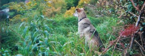 Mobile Hundetrainerin - Wo wird trainiert