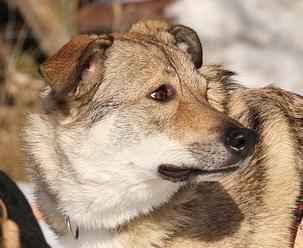 Mobile Hundetrainerin - Über mich
